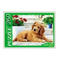 Пазл 260 Красивый щенок У260-7259